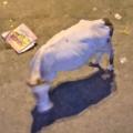 Kuh in Delhi