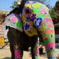Auf dem Weg zum Elephant Festival